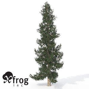 colorado blue spruce tree 3d model