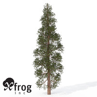 3d model xfrogplants ponderosa pine tree