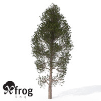 xfrogplants monterey pine tree 3d model