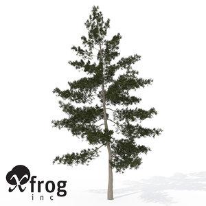 xfrogplants eastern white pine 3d max