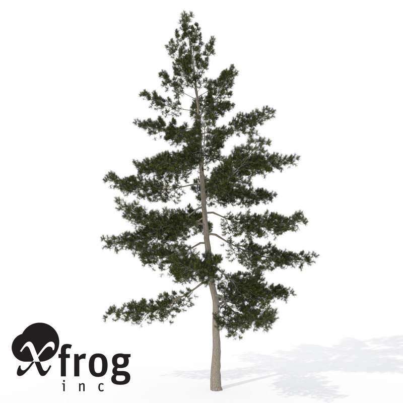 xfrogplants eastern white pine 3d max