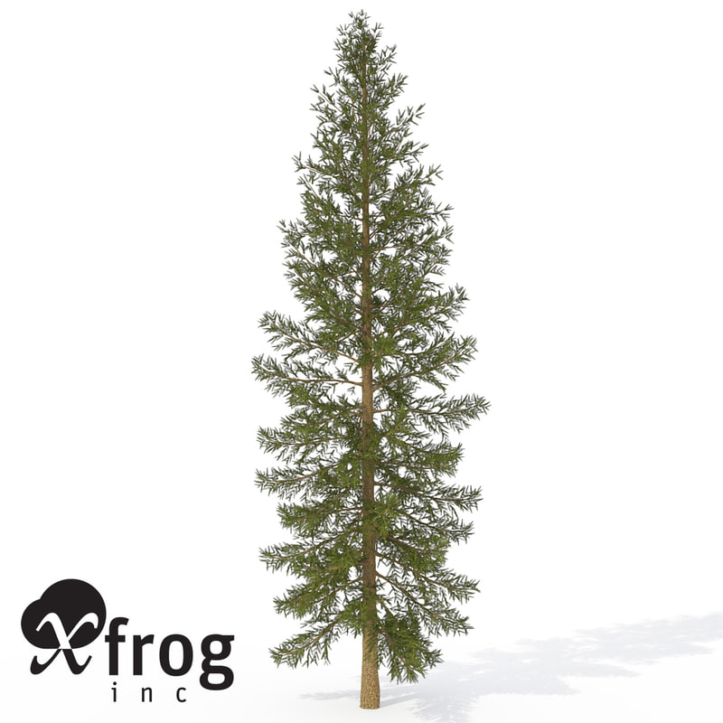 xfrogplants douglas fir tree 3d model