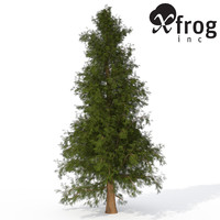 c4d xfrogplants western red cedar