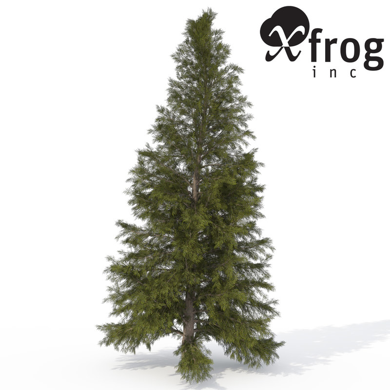 3d xfrogplants eastern hemlock tree model