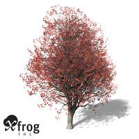 3d xfrogplants red maple tree