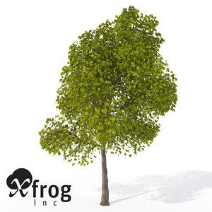 xfrogplants southern catalpa tree 3ds