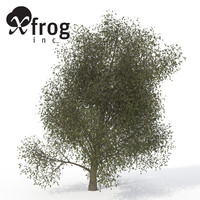 3ds xfrogplants american beech tree