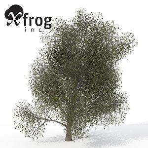 3ds xfrogplants american beech tree