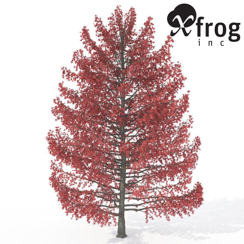 sweet gum tree 3d model