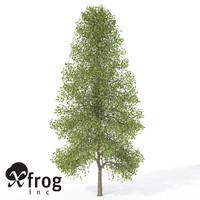 xfrogplants tuliptree tree 3d model