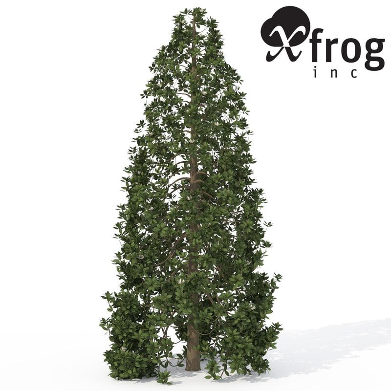 3ds max xfrogplants southern magnolia tree
