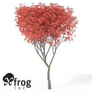 xfrogplants umbrella magnolia tree c4d