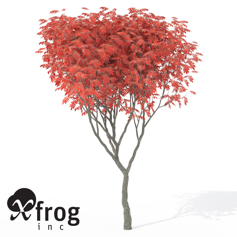 xfrogplants umbrella magnolia tree c4d