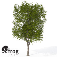 3d model of xfrogplants american planetree tree