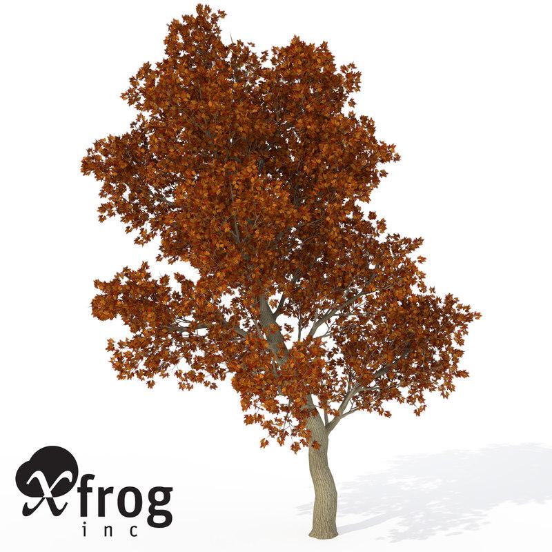 3d model of xfrogplants red oak tree