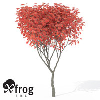 max xfrogplants staghorn sumac tree