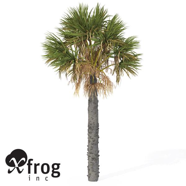xfrogplants palmetto palm 3d model