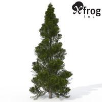 xfrogplants eastern arborvitae tree 3d lwo