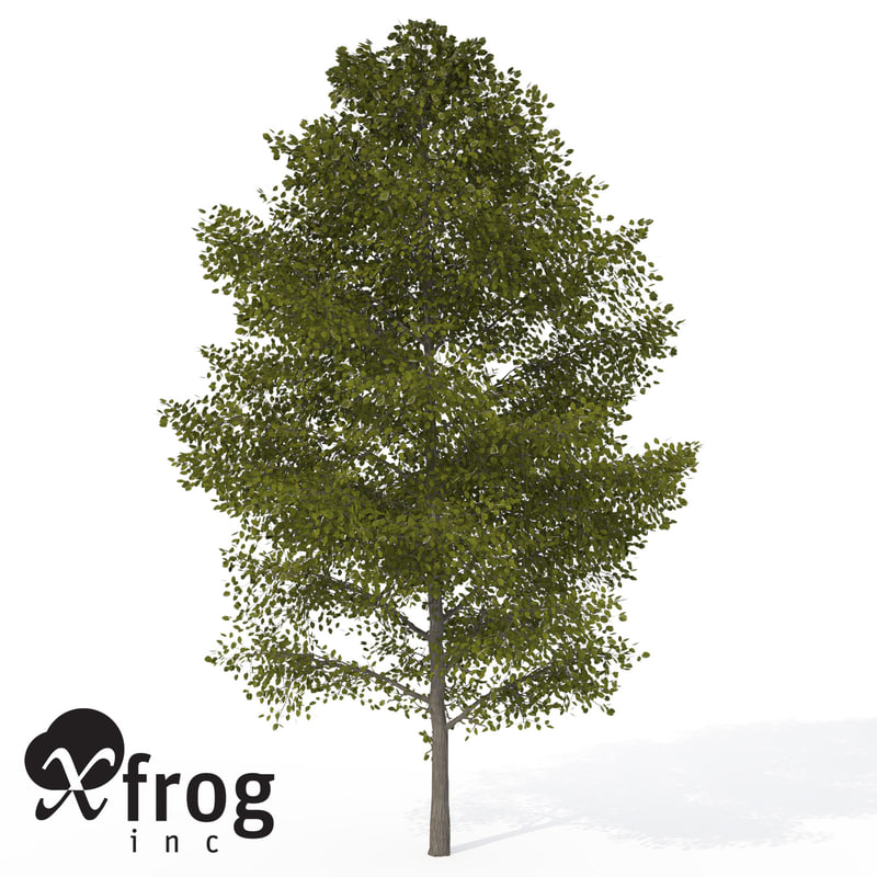 xfrogplants american linden tree 3d model