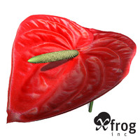 XfrogPlants Flamingo Lily