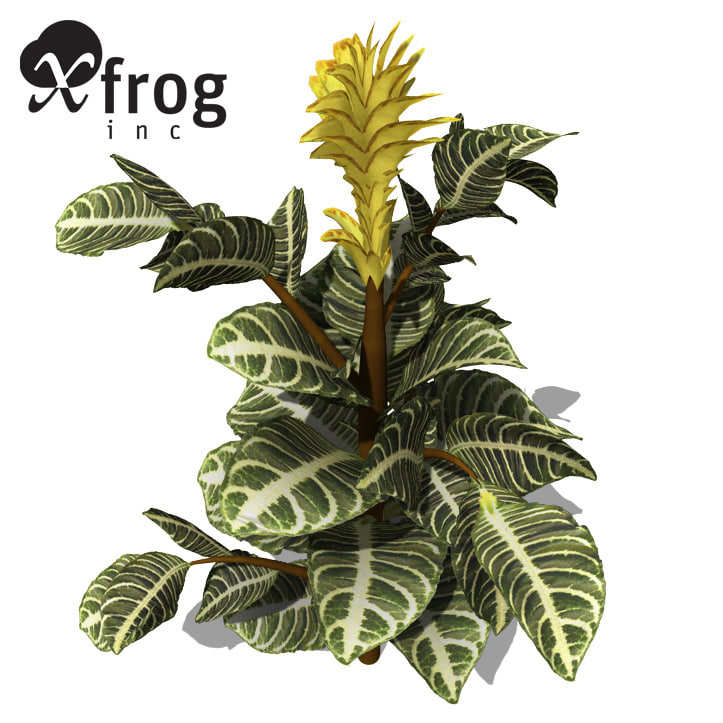 xfrogplants zebra plant 3d model