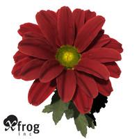 xfrogplants oxeye daisy plant 3d c4d