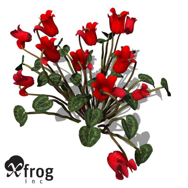 3d model xfrogplants cyclamen plant
