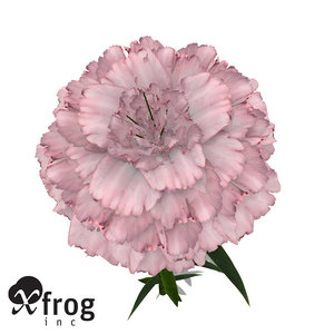 xfrogplants carnation plant flowers 3d model