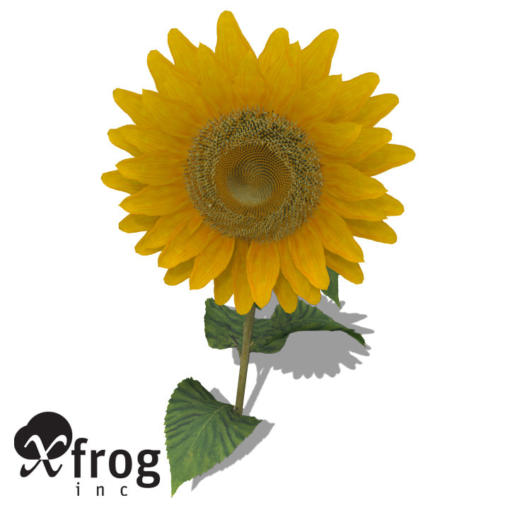 3d model xfrogplants sunflower plant