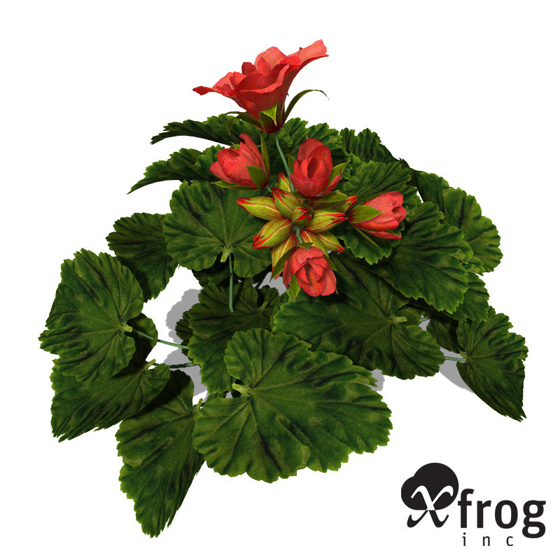 3dsmax xfrogplants geranium plant