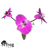 3d model xfrogplants moth orchid plant