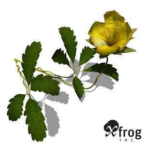 c4d xfrogplants creeping cinquefoil plant