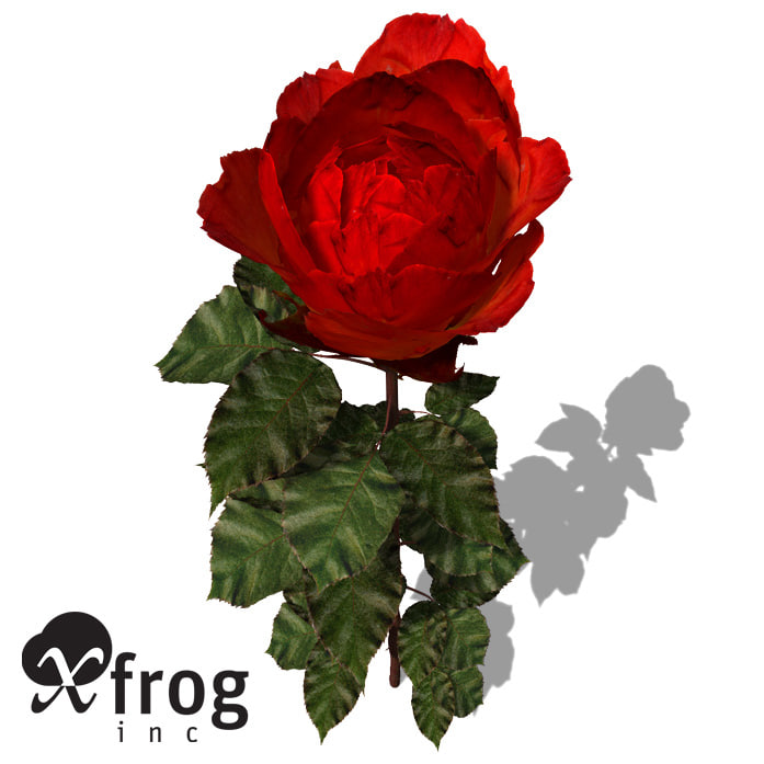 xfrogplants rose flowers 3d model