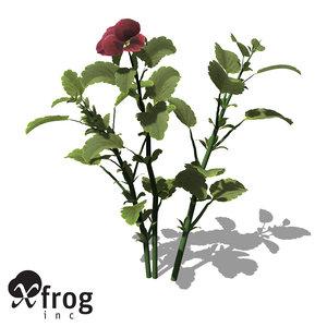 xfrogplants pansy plant 3d 3ds