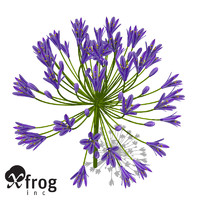 XfrogPlants Bell Agapanthus