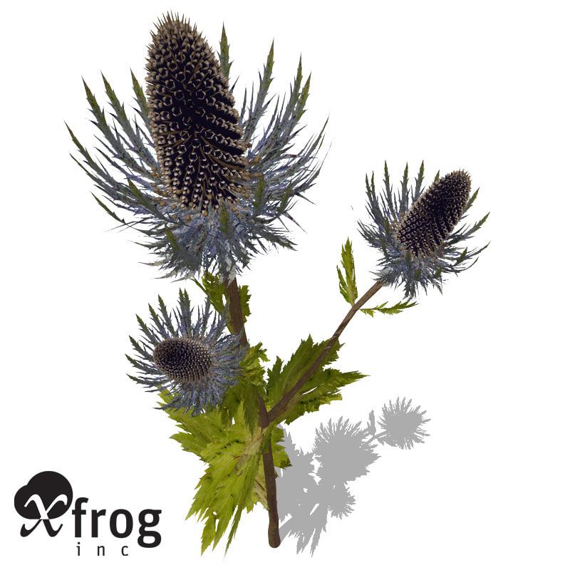 xfrogplants sea holly plant 3d c4d