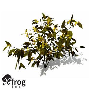 3d model xfrogplants scarlet plume plant