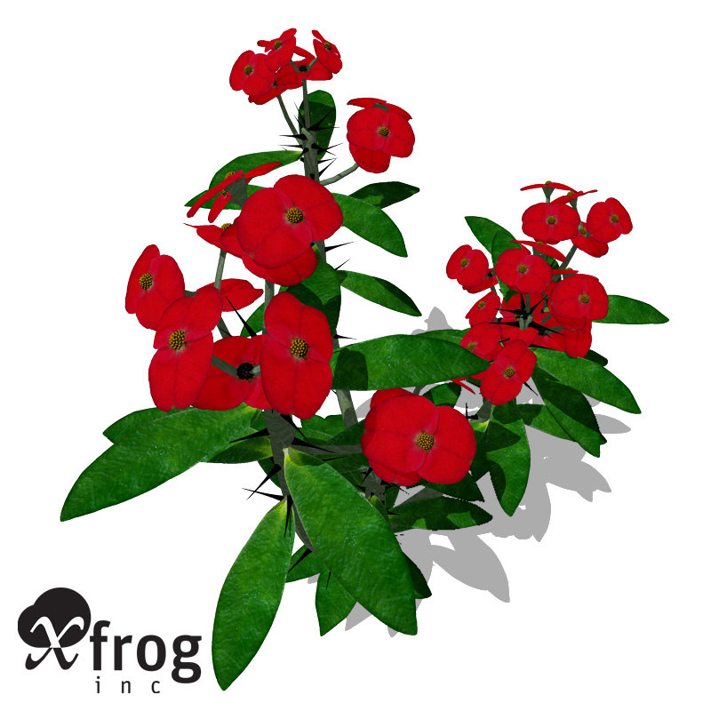 xfrogplants crown-of-thorns plant 3d 3ds