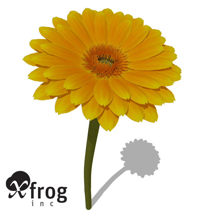 xfrogplants gerbera plant flower max