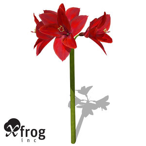 xfrogplants amaryllis plant 3d model