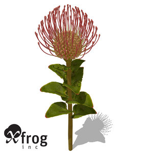 xfrogplants nodding pincushion plant 3d max