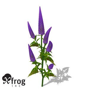 xfrogplants gooseneck loosestrife plant 3d model