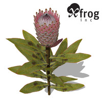 3ds max xfrogplants king protea plant