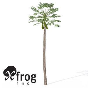 3d xfrogplants papaya plant tree model