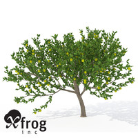 xfrogplants mexican lime tree shrub 3d model