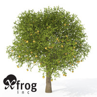 XfrogPlants Grapefruit Tree