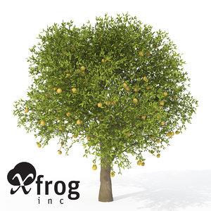 xfrogplants grapefruit tree fruits 3d model