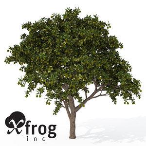 xfrogplants mango tree 3ds