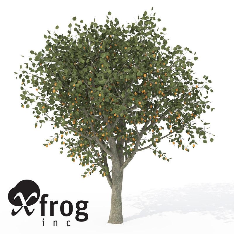 xfrogplants apricot tree 3d model