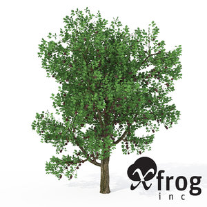 3d xfrogplants plum tree